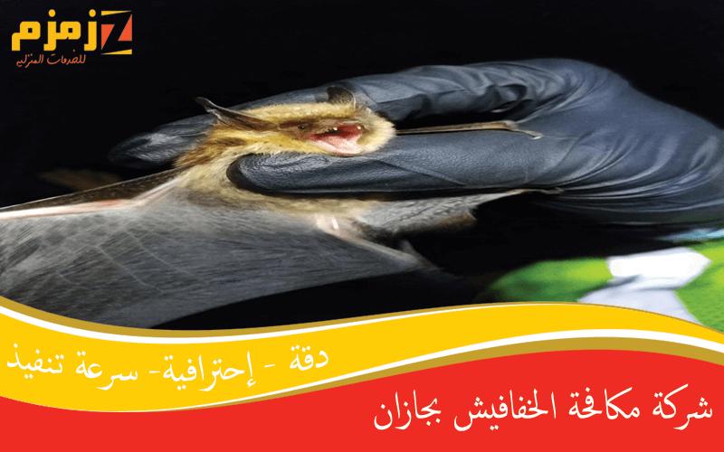 شركة مكافحة الخفافيش بجازان